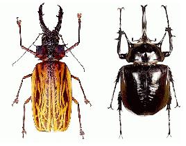 entomologie-economique