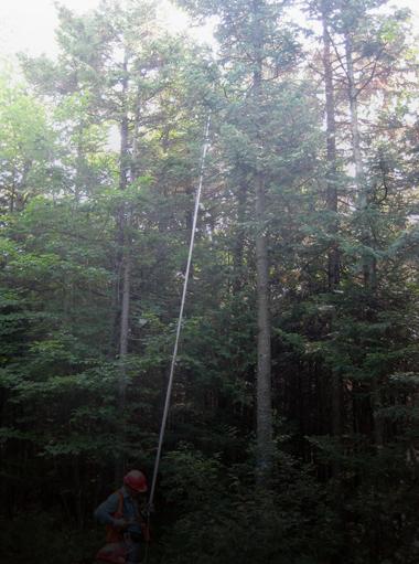 ravagent-la-sylviculture-ou-lexploitation-forestiere