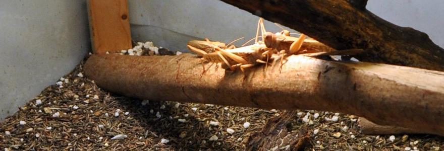 l'insectarium