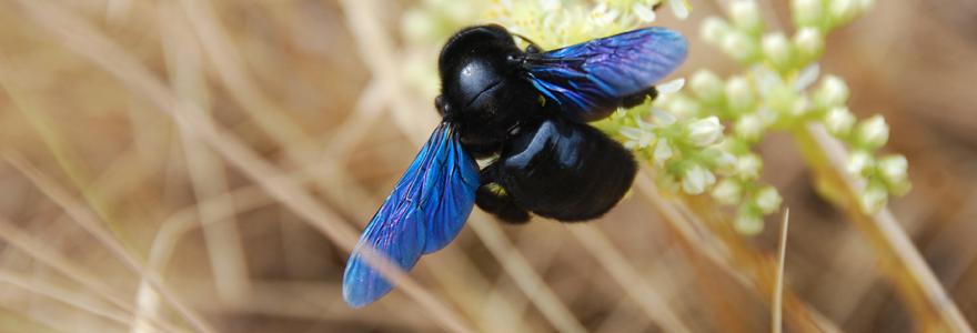 Glossaire d'entomologie